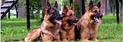 Сопровождение грузов с собаками