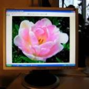 Продам монитор SAMSUNG,  Sync Master 740N, Ж.к.