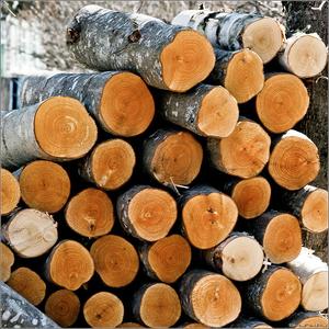 продам дрова твердых пород деревьев