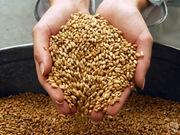 Куплю зерновые и масличные