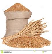 Закупаем пшеницу. 2, 3 класс